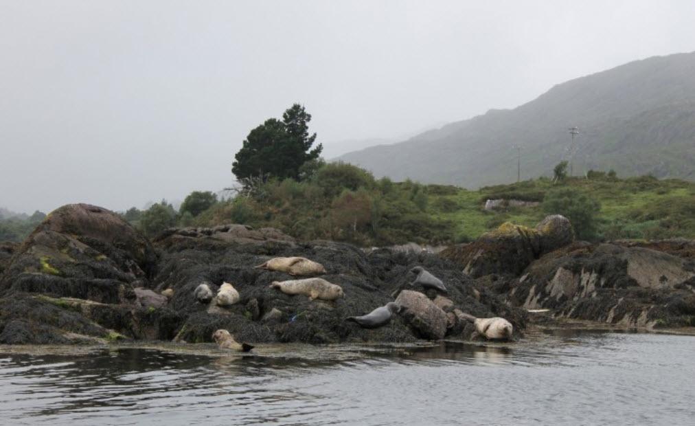Seal Garinish Island Garden